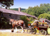 Morwellham Quay carriage rides